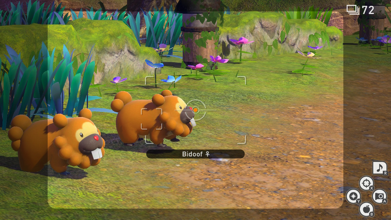 Two beaver pokemon - Bidoof - stumble across the path of the player, waiting to be photographed.